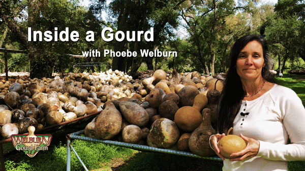45: Take a Look Inside a Gourd with Phoebe Welburn